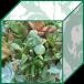 spareshelf.box.succulentsalon