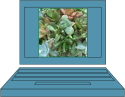 spareshelf.succulent.virtual