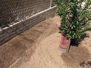gardening.2013 040