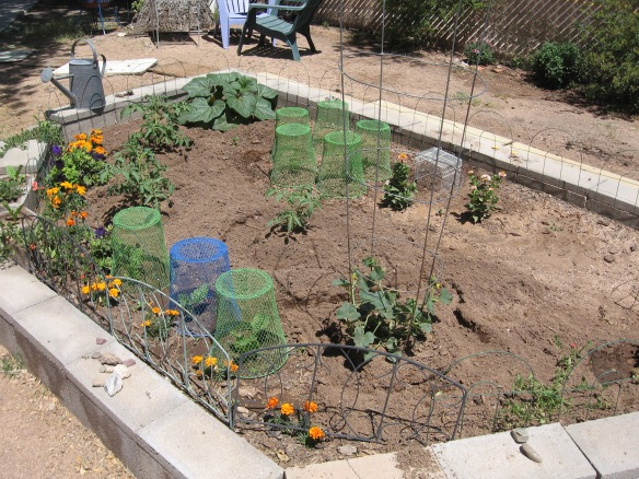 gardening.2013 082