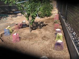 gardening.2013 096