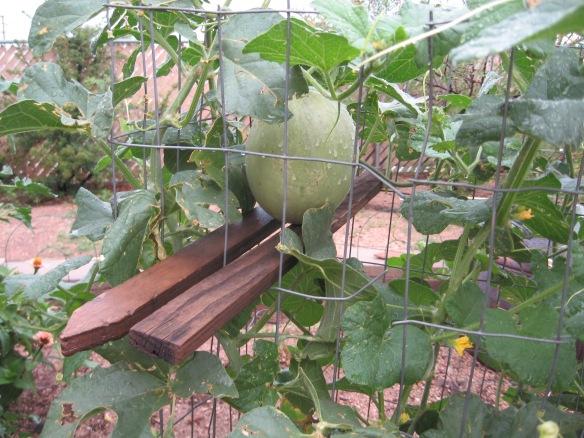 gardening.2013 114