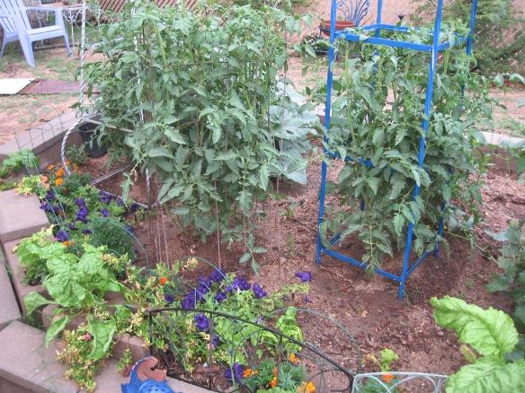 gardening.2013 116