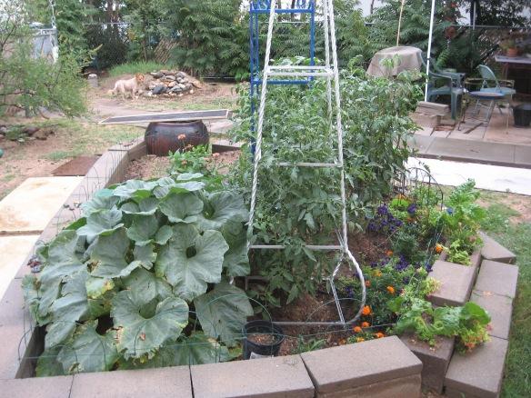 gardening.2013 119