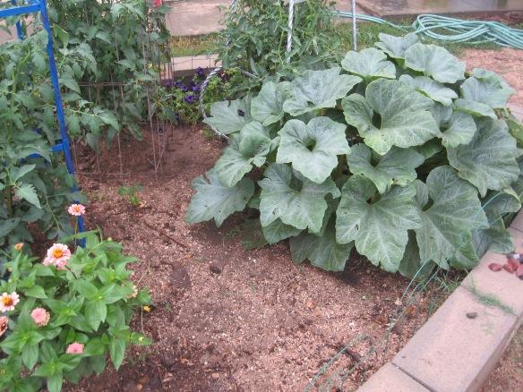 gardening.2013 125