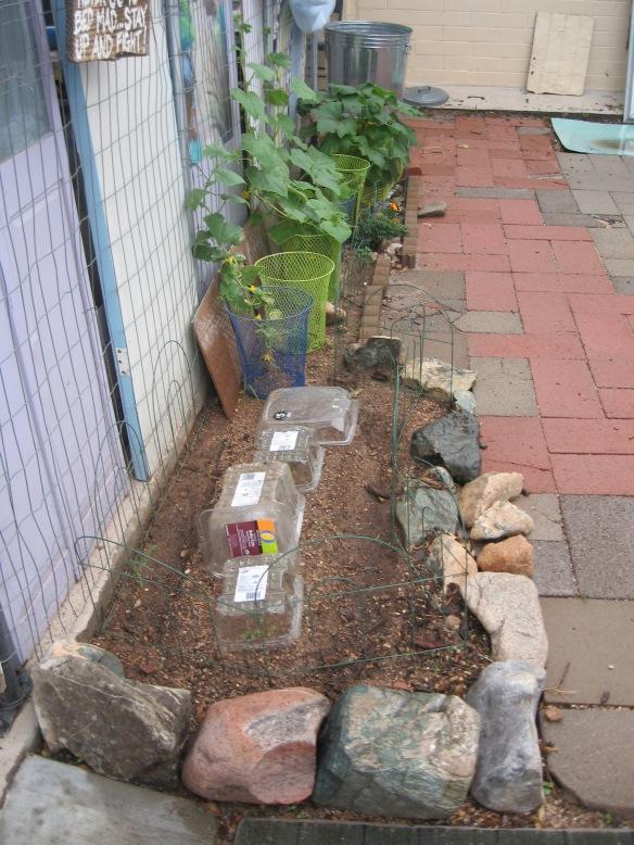 gardening.2013 134
