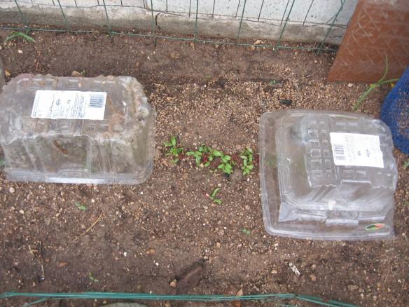 gardening.2013 135