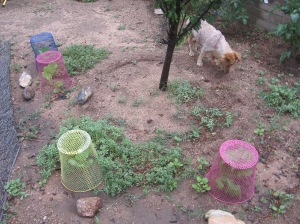 gardening.2013 159