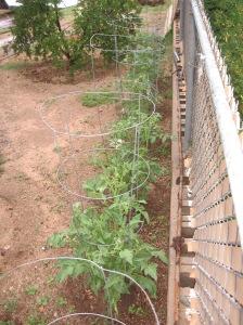 gardening.2013 190