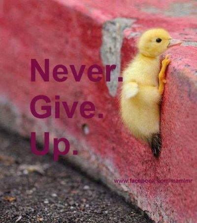 Never,never give up