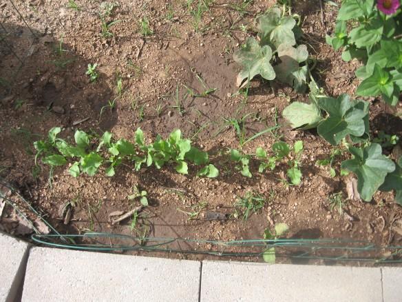 ss.gardeninghoer 004