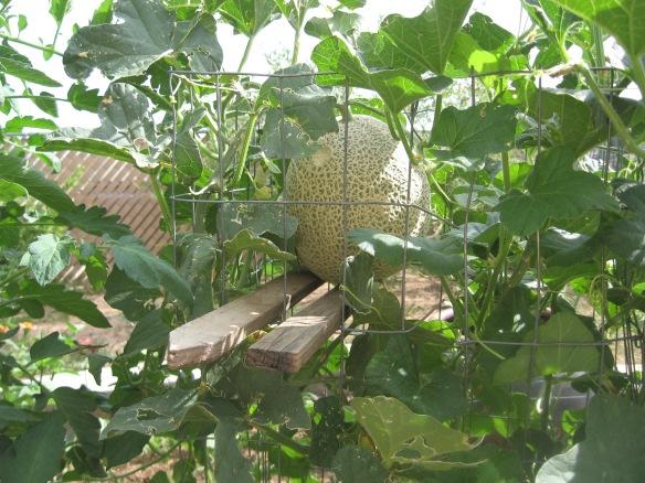 ss.gardeninghoer 007