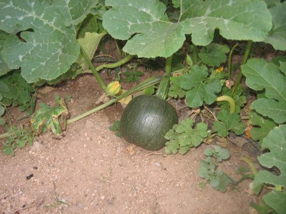ss.gardeninghoer 022
