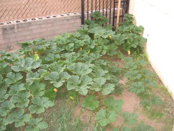 ss.gardeninghoer 025