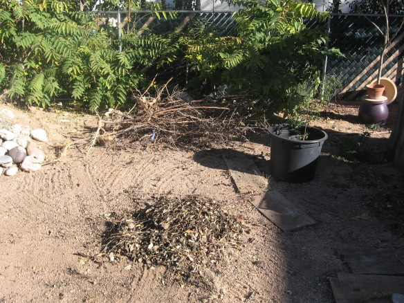 Branches, sticks and debris, Compost debris