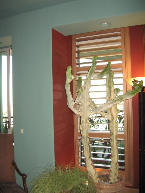 Great Room / Custom Shutters