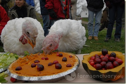 Save a Turkey, Eat Vegetarian/Vegan